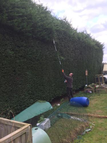 Hedge-maintenance