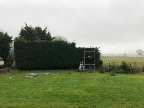 hedge-cutting